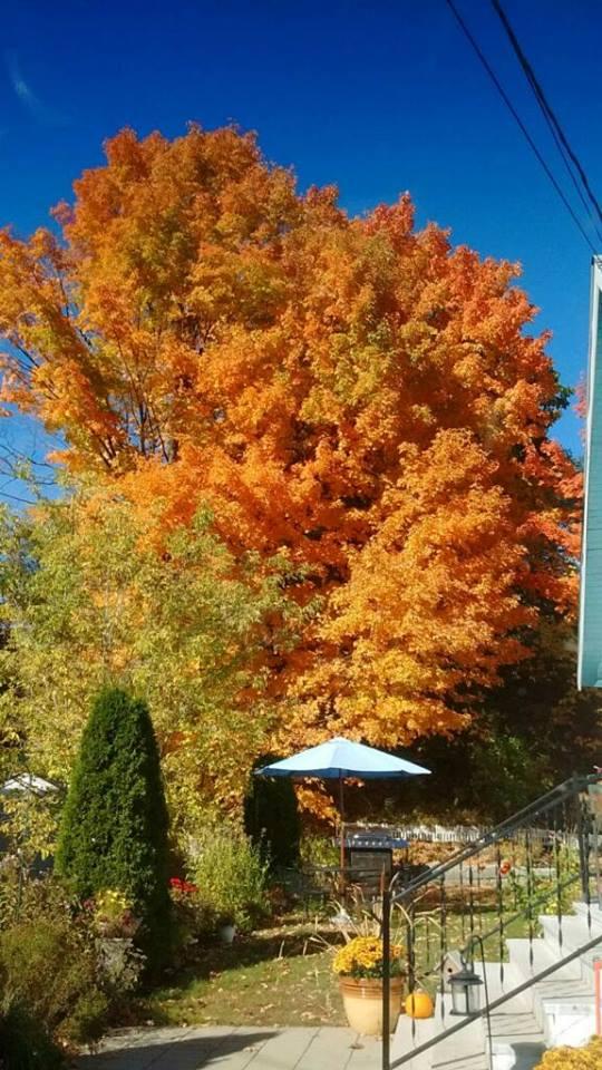 dad-mom-fall-tree